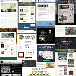 Website Development & Graphic Design